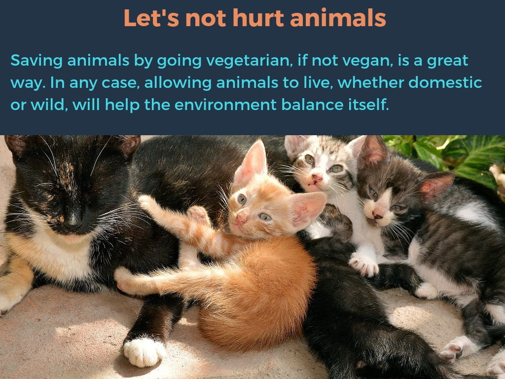 Let's not hurt animals